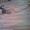 Циклёвка, шлифовка паркета, досок.Немецкое оборудование без пыли #764150