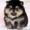 Продам щенком померанского миниатюрного шпица #1110068